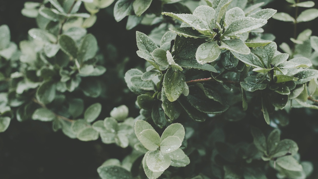 The Importance of Digital Landscaping